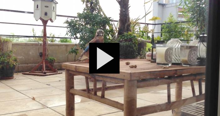 Vidéo : Joseph Veil