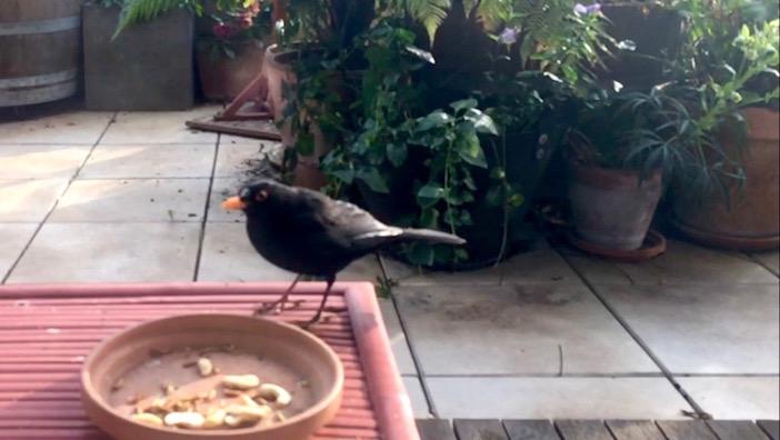 Plumti sur la terrasse aux oiseaux