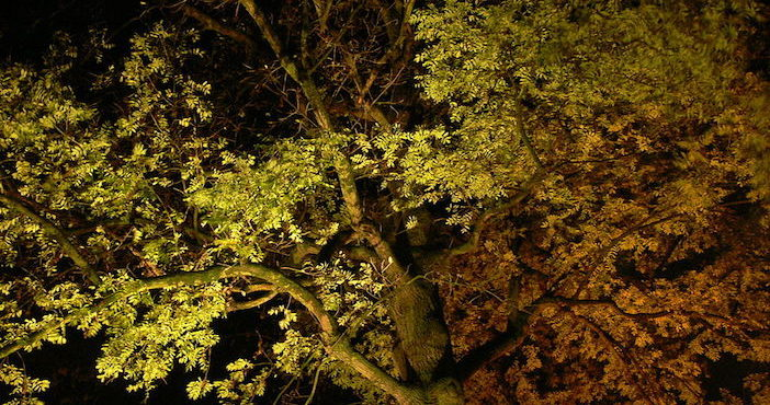 Arbre eclaire la nuit, pollution lumineuse