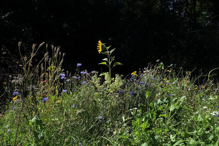 Fleurs pour aveilles permaculture