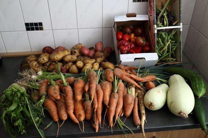 carottes récoltées en parmaculture, jardin de Frederick Carnet