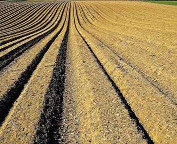 L'agriculture pétrochimique est en train de désintégrer la vie qui grouillait sous nos pieds