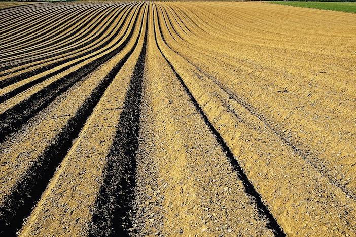 Les sols appauvris par l'agriculture pétrochimique