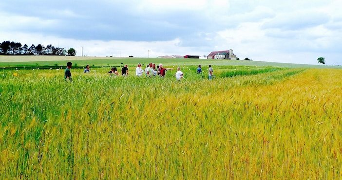 Agriculture biologique efficace contre ravageurs