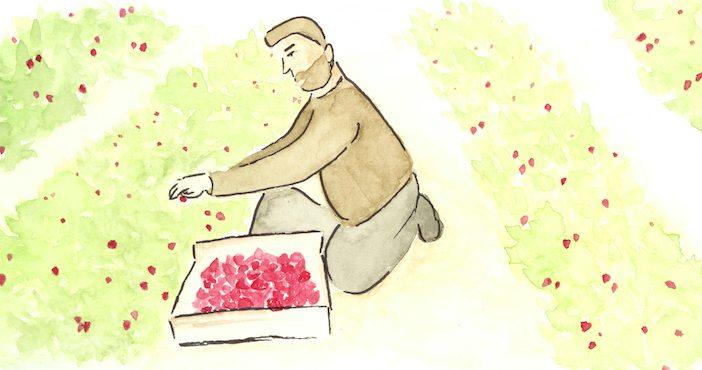 Saisonniers agricoles en plein travail, aquarelle de Laura Remoué