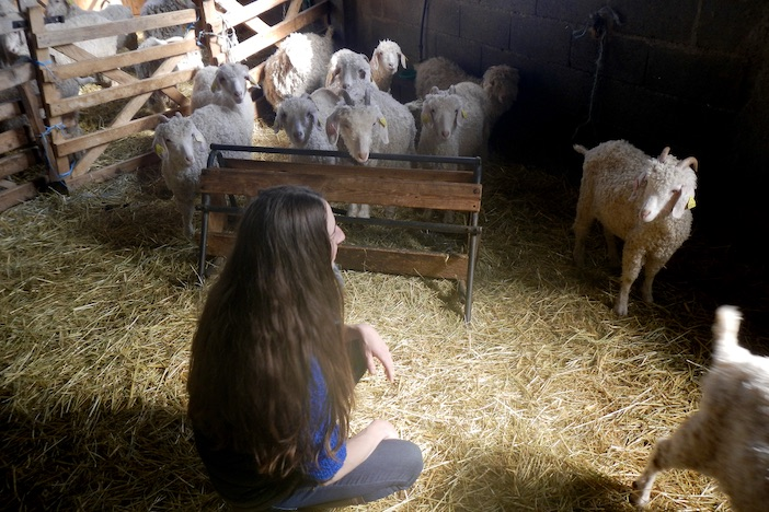Les Chèvres de Celine Chemla