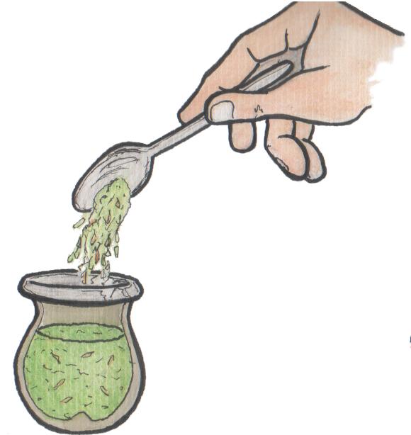 le yerba dans la calebasse
