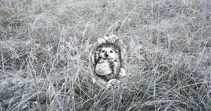 herisson dans l'herbe