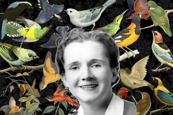 Rachel Carson, l'amie des oiseaux