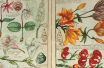 Herbier (la bioremédiation, une technique d'apprentis-sorciers ?)