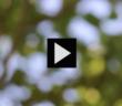Mini mire vent feuilles soleil