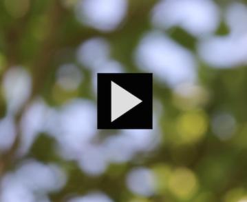 Mini mire #29 : Au Bois joli